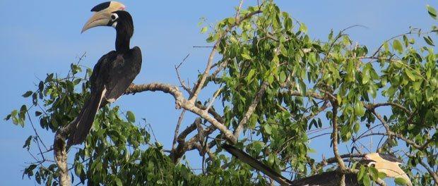 fugle i yala nationapark i Sri Lanka - Rejsebudget til Sri Lanka