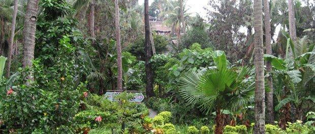hygger op ad bjergskråningen placeret i en idylisk vild palmehave
