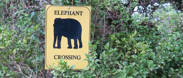skilt med elefant i sri lanka