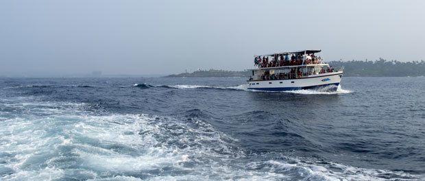 hvalsafari på ferien er luksus her i båden