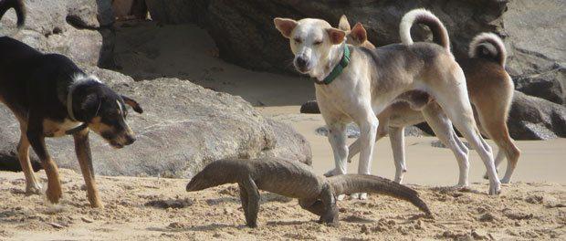 hunde der hygger på stranden
