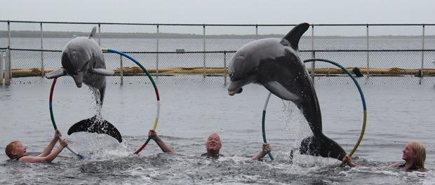 delfin show hvor vi selv var artisterne