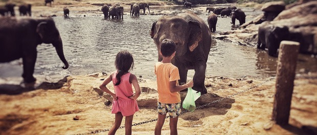 børnene fodrer elefanterne i pinnawala