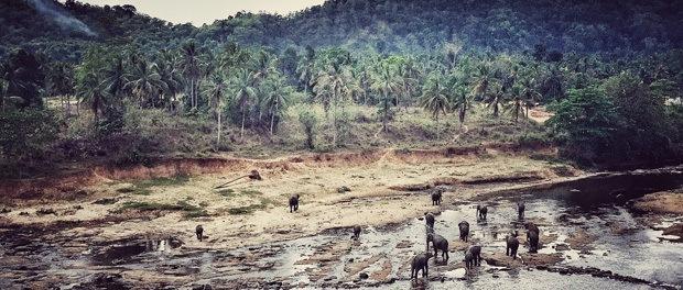 elefanterne i pinnawala