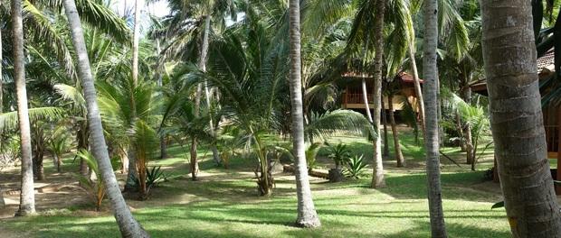 haven i palm paradise