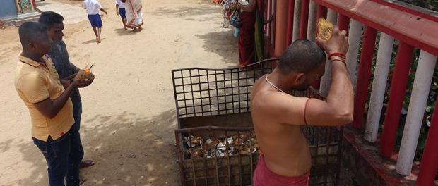 offring som vi ikke helt forstår ved templet i trincomalee