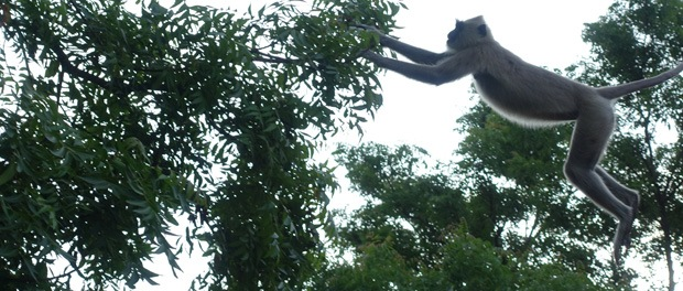 aberne hoppede fra tag til tag og fra træ til træ