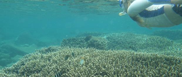 god oplevelse under vandet ved pigeon island