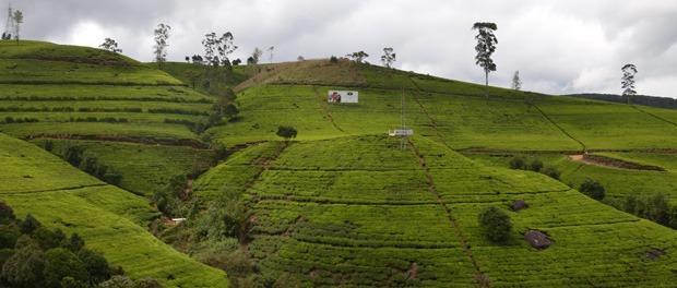 teplantagerne på sri lanka