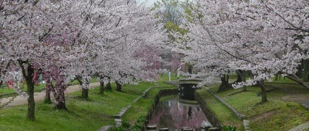 japan-blomster
