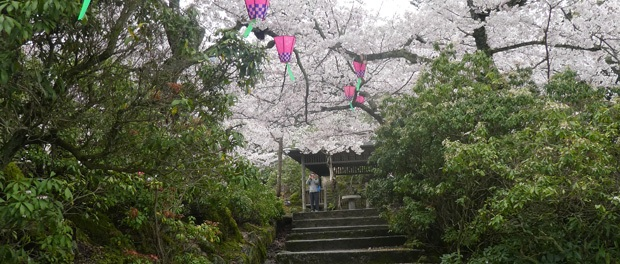 japan-rejser