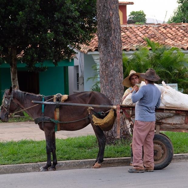 hestevogn
