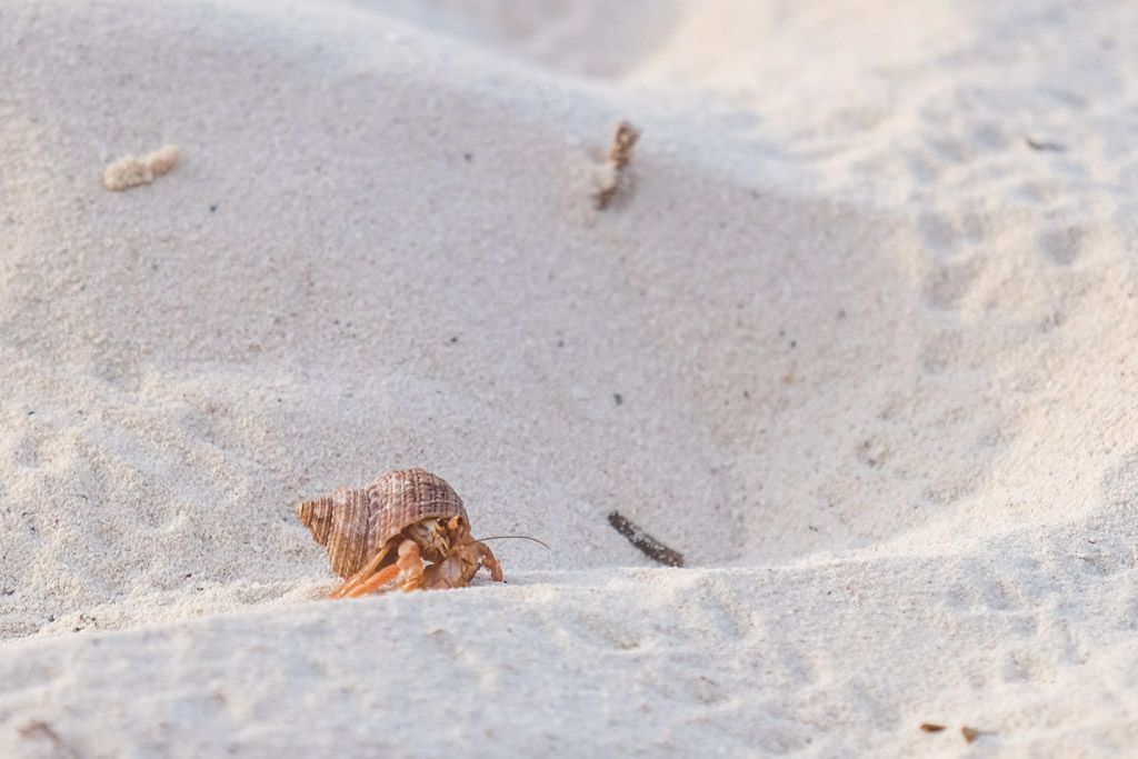 tid til krabbe jagt