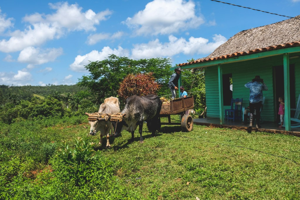 vinales local living