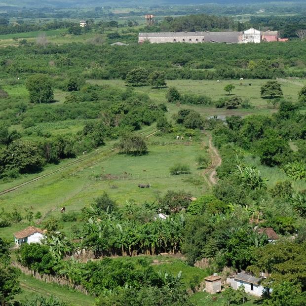 sukkerplantager tæt ved trinidad