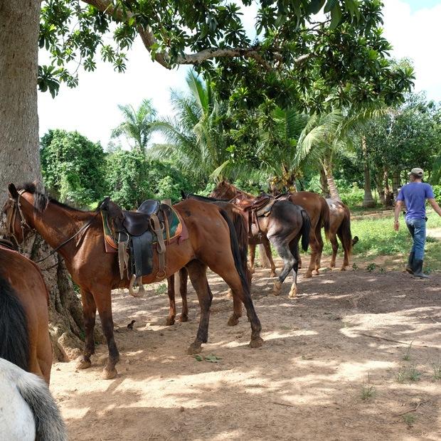 på tur med hestene