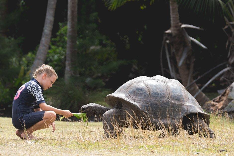 skildpadderne på curiose