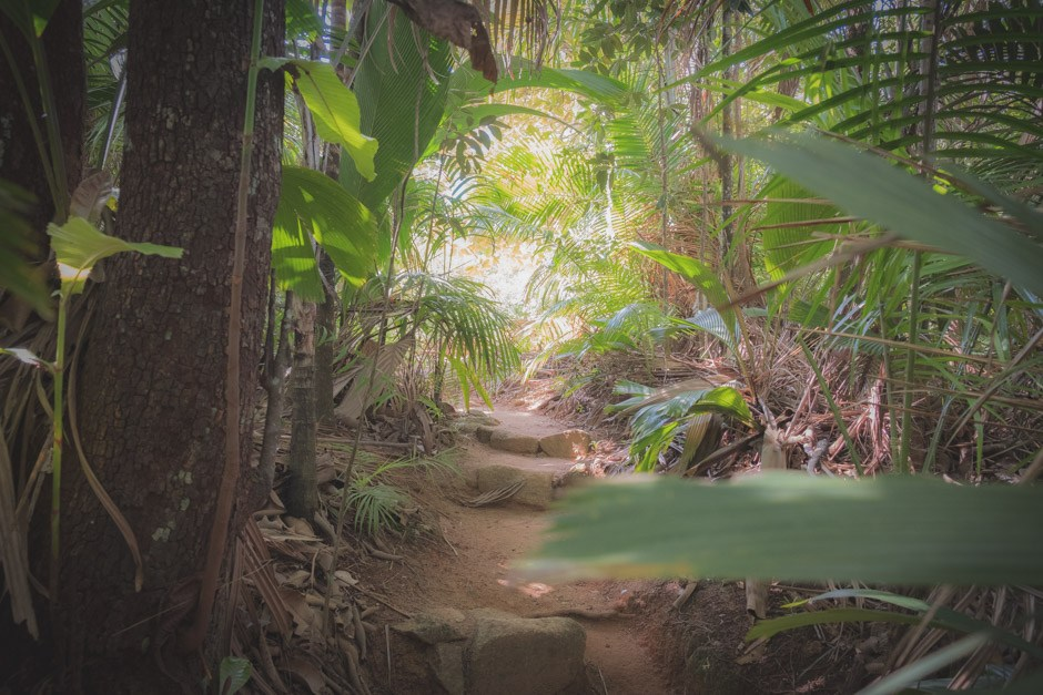 valle de mai - paradisets have