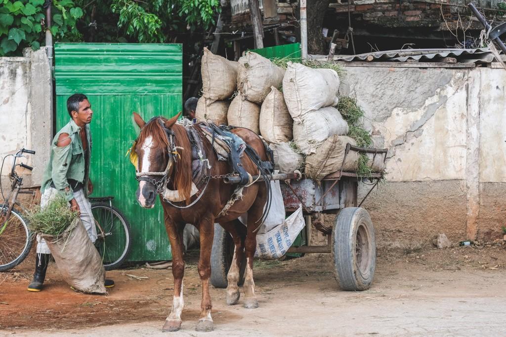 de lokale arbejder i trinidad