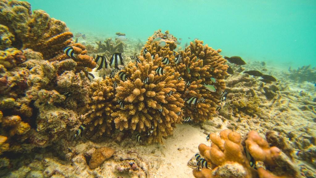 undervandslivet ved felidhoo