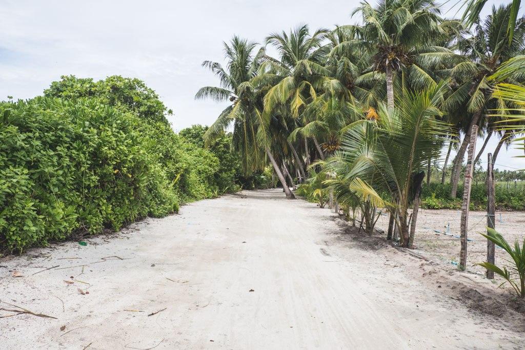 lokal ø thoddoo maldiverne